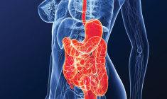 intestino-o-segundo-cerebro+debora-oro