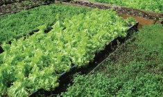 o-desabrochar-da-alimentacao-organica+organicos